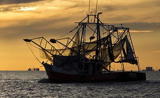 Shrimp Facts | American Shrimp Processors Association